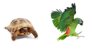 Scottsdale exotic pet euthanasia
